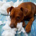 Pet Damage on Furniture